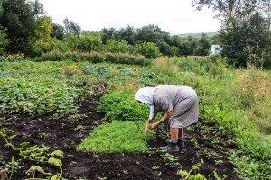 Бабушка работает на огороде