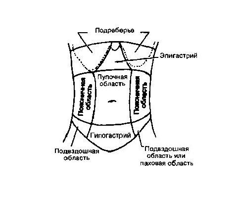 схема гипогастрий