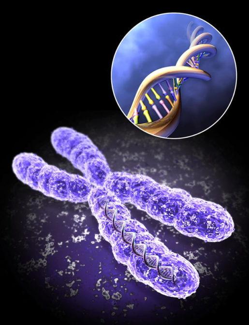 Мутация в хромосоме