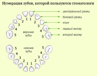 система нумерации зубов у детей