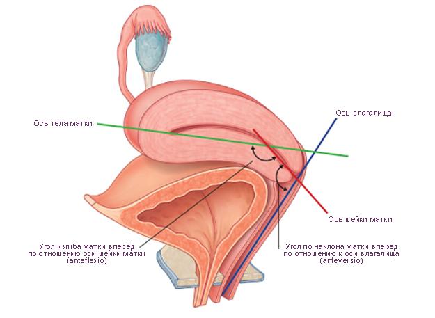 17 видов женского оргазма: вагинальный, клиторальный ...