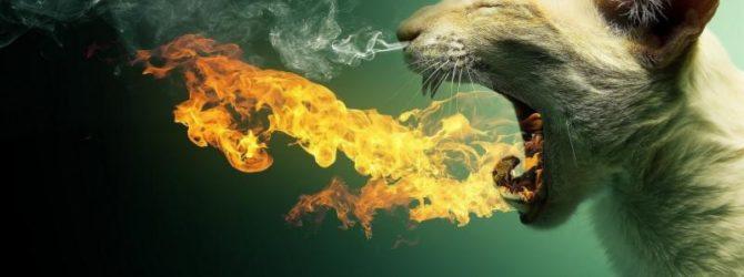 Отрыжка огнём у кота