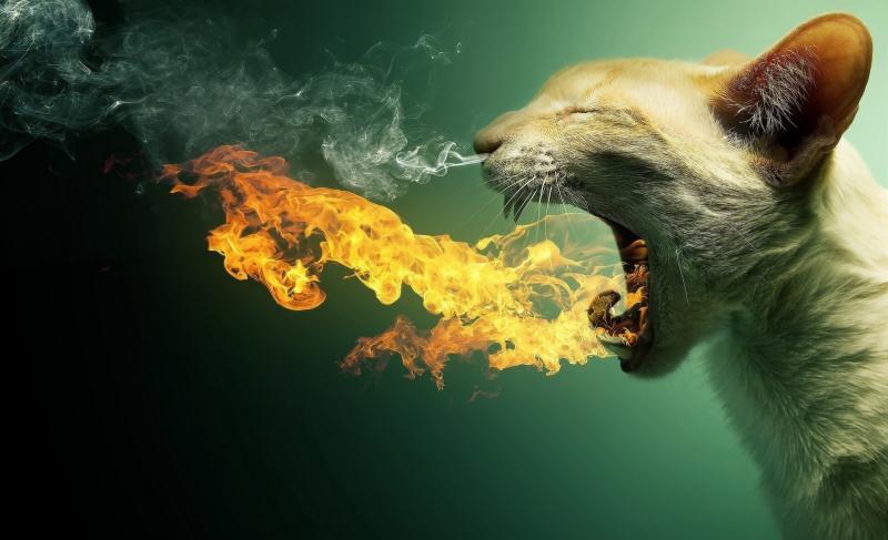 Отрыжка кислым: причины и угрозы