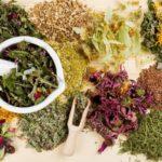 Сбор целебных трав