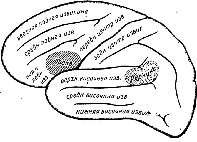 Схема строения нервных центров речи