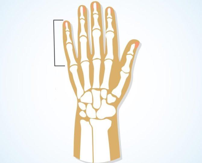 Схема расположения костей в кисти