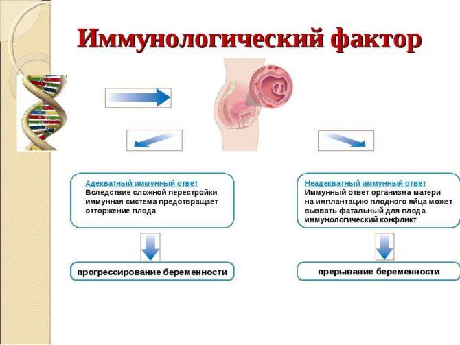 Особенности иммунитета при беременности