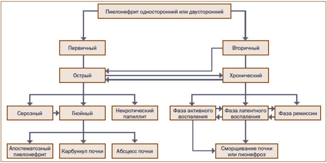 Лечение пиелонефрита при беременности: основные методы и особенности