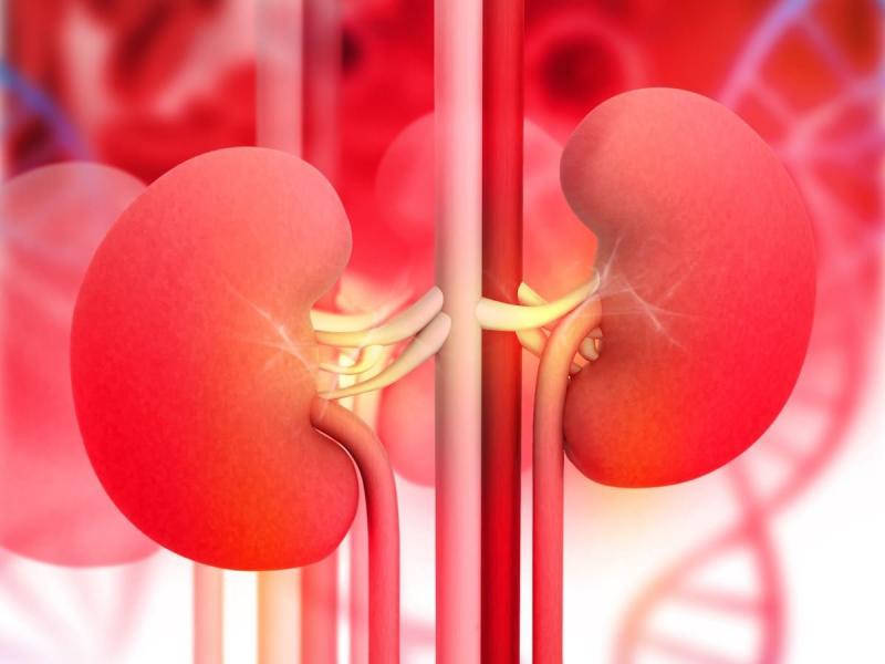 Ультразвук: возможности диагностического метода при пиелонефрите