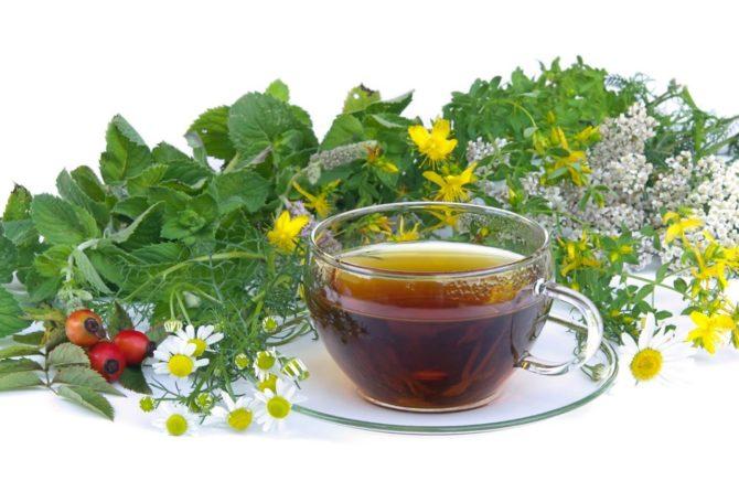 Лекарственные травы и отвар из них