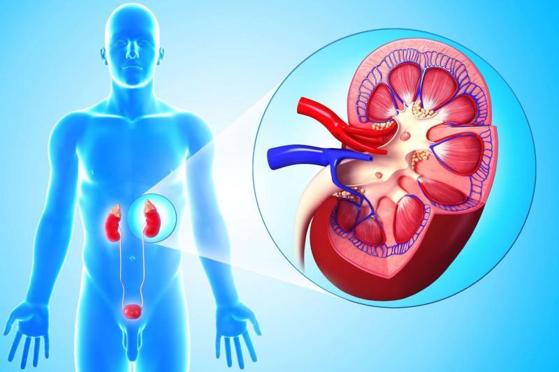 Хронический пиелонефрит: как распознать болезнь