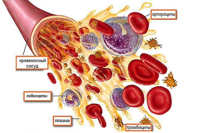 Плазма и элементы крови