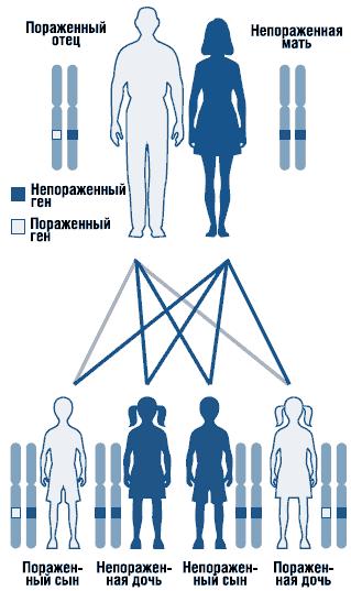 Аутосомно-доминантный тип наследования: схема