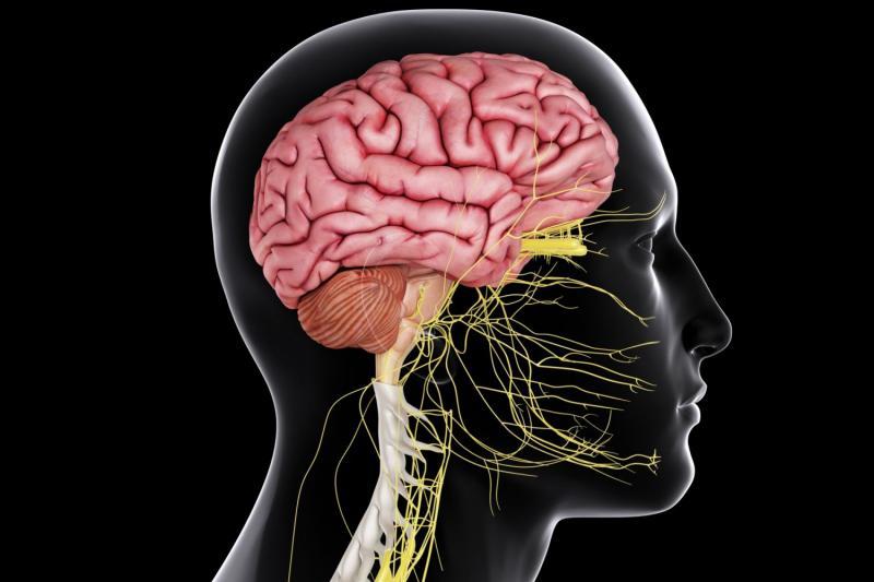 Острый рассеянный энцефаломиелит: какую опасность несут вирусы
