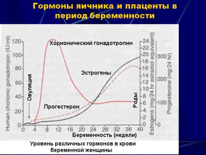 Гормональный фон при беременности (схема)