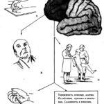 Лобная психика (схема)