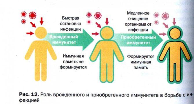 Врождённый и приобретённый иммунитет
