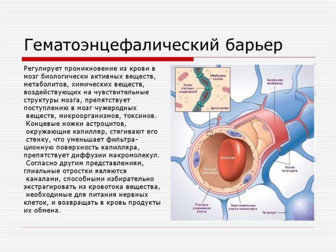 Гематоэнцефалический барьер (схема)
