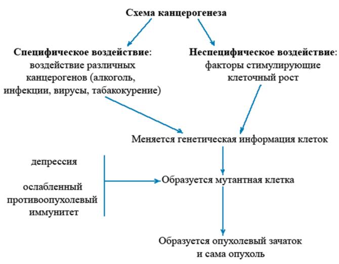 Образование опухоли (схема)