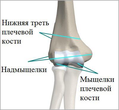 Мыщелок и надмыщелки плечевой кости