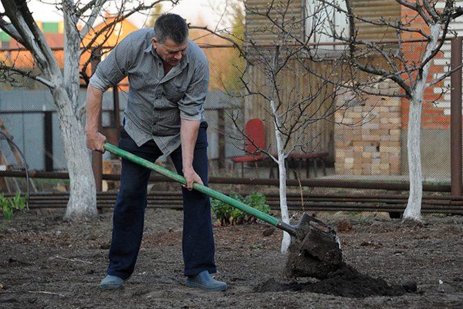 Мужчина работает на огороде