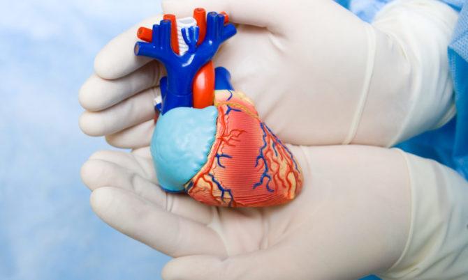 сердце в ладошках врача