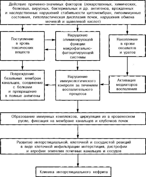 Механизм развития тубулоинтерстициального нефрита