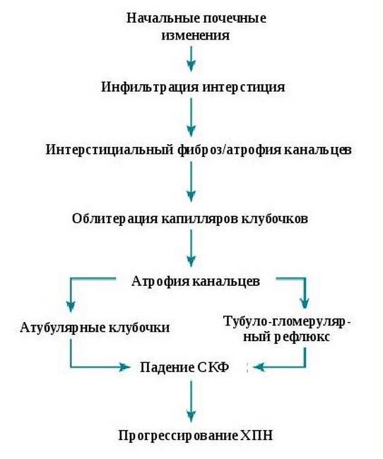 Механизм развития изменений при ХТИН