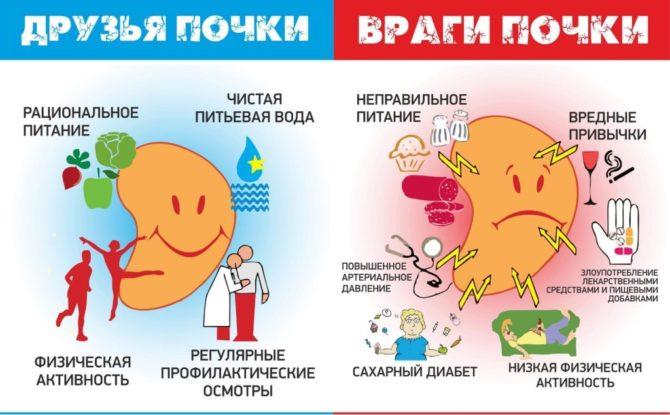 Профилактика болезней почек
