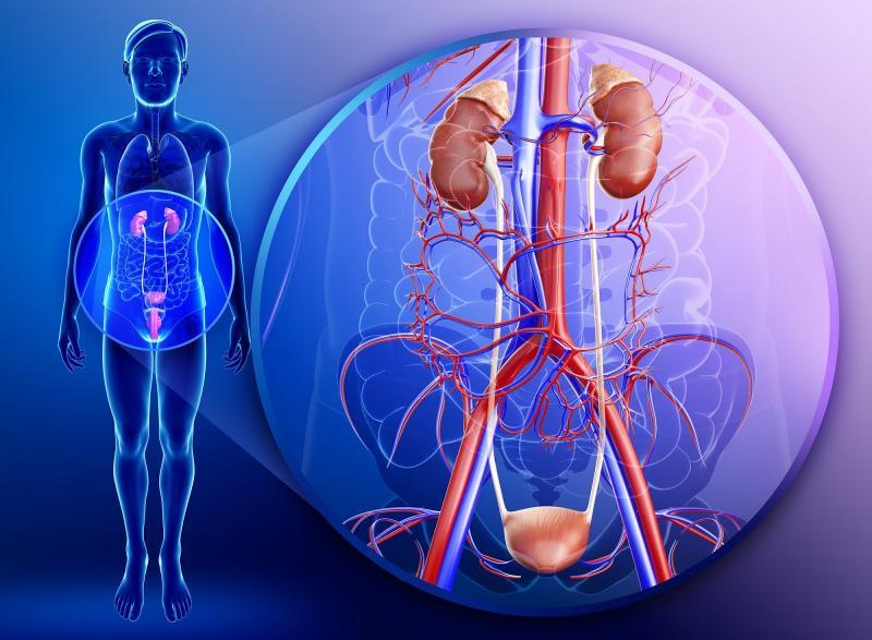 Как предупредить заболевания почек: эффективные методы профилактики