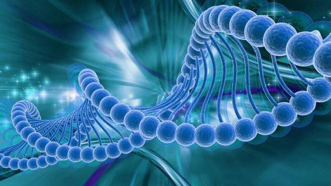 Молекула ДНК (схема)