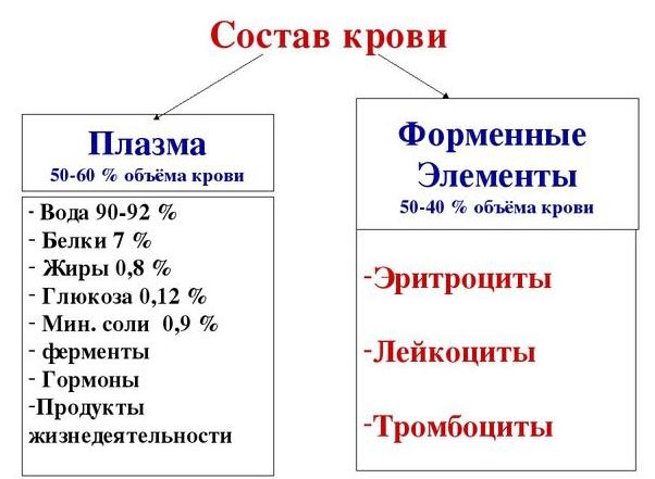 Состав крови в норме (схема)